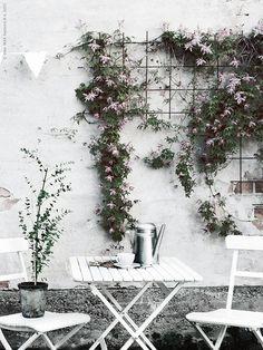 Med några stora och stadiga balkonglådor på golvet kan du inreda med dekorativa och lättskötta klätterväxter.