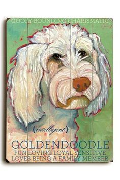 I sooooo want this -Abby.   #goldendoodle #dogs #cute