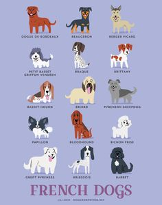 FRENCH DOGS art print dog breeds from France by doggiedrawings