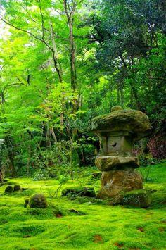 Charming moss garden ♥