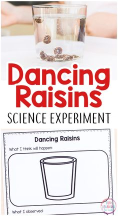 This simple dancing raisins science experiment is super simple and so much fun! It comes with free printable science recording sheets too! #scienceforkids #scienceexperiments #stem