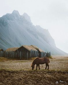 """25.9k Likes, 330 Comments - Alexandra Taylor (@alliemtaylor) on Instagram: """"An Icelandic horse grazing just below the looming Vestrahorn. This was one of those moments where…"""""""