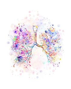 traquea anatomia diapositivas diabetes