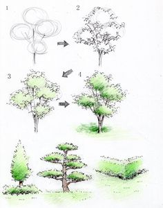 Drawing Art Various Drawings - Landscape Architecture Drawing, Landscape Sketch, Landscape Drawings, Plant Sketches, Tree Sketches, Nature Sketch, Nature Drawing, Realistic Drawings, Art Drawings