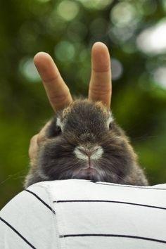 Bunny Ears by Jean Beal. ☀