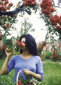 Sophia Loren picking roses in a garden at her villa, 1964.