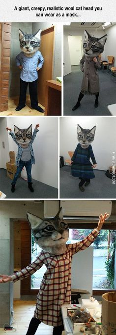 How To Confuse And Terrify Your Cat: Buy This. I NEED THIS