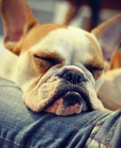 What a Mug! Thunder, the very cute French Bulldog