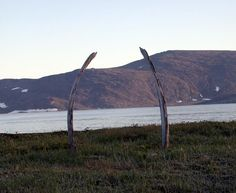 10 Places Where You Can See Whale Bones Outside a Museum | Atlas Obscura