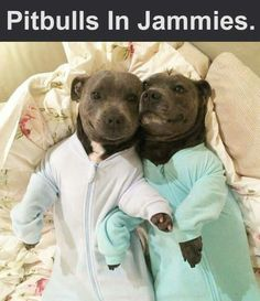 Pitbulls in jammies! Is there anything better?!