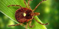 İlginç Böcekler | Dokuzaralık