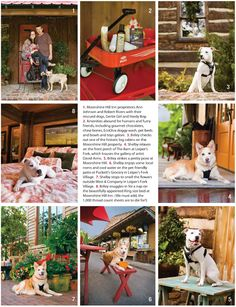 Pet-Friendly Leiper's Fork | Nashville Paw www.moonshinehill.com