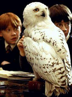 Ron Weasley (Rupert Grint), Hedwig, Harry Potter (Daniel Radcliffe) - Harry Potter
