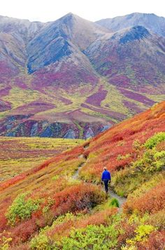 Heading back to the Goldensides trailhead, a great and easy hike off the Dempster Highway in the Yukon Territory
