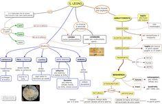 MAPPE per la SCUOLA: IL LEGNO, mappa concettuale