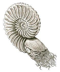 Illustration eines prähistorischen Nautiliden