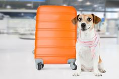 Everything you need to know about traveling with pets!