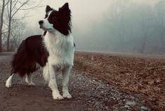 Bildergalerie - www.lets-dog.com Goats, Animals, Pictures, Animales, Animaux, Animal, Animais, Goat