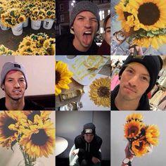 Out little sunflower