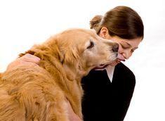 Etiqueta e Boas Maneiras: Regras para levar o animal de estimação à rua