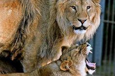 Park, Animals, Animal Welfare, Round Round, Cats, Animales, Animaux, Parks, Animal
