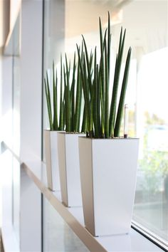 Textured stack displays in an indoor office setting with for Zimmerpflanzen dekorieren