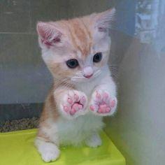Kitty paws!!!!