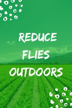 Follow the link to find out how we do this! Get Rid Of Flies, Fly Traps, What To Use, Mission Accomplished, Outdoor Areas, Stables, How To Find Out, Backyard, Link