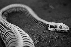 weaving and cracking bones