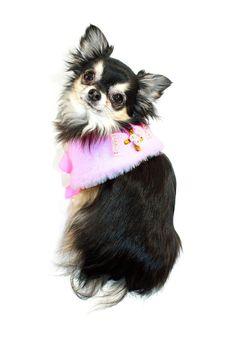 7 best Pet Clothing cute images on Pinterest  e6f7980fe883