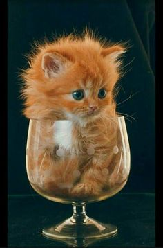 cute and attractive pets: Cute and attractive Kitty - Cute & Funny Animal Pictures - Katzen / Cat Cute Baby Cats, Cute Little Animals, Cute Cats And Kittens, Cute Funny Animals, Funny Cats, Kittens Cutest Baby, Adorable Kittens, Baby Kitty, Pet Cats