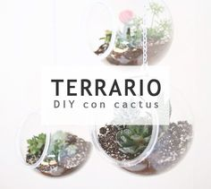 Crea terrarios de cristal con cactus #deco #diy