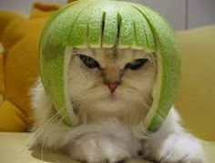 Cambio de peluquero. www.animalterra.com