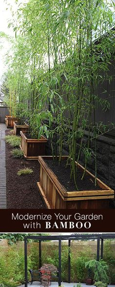 DIY - How To Grow Bamboo & Modernize Your Landscaping!  It's a good idea to keep them isolated in a container so they don't take over your yard.