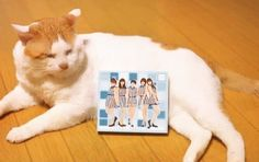 R.I.P. Nekotaro Part3 ぬんとぅんはJuice=Juice 1stアルバムFirst Squeeze!も一緒にお祝いしてくれたね #juicejuice #金澤朋子 #かなとも #ハロプロメンバー猫 #ハロメン猫 #愛猫 #ぬんとぅん #猫太郎 #ぶさかわ #ぶさかわ猫 #野良猫 #里親 #cat #cutecat #chubbycat #rip #tomokokanazawa #firstsqueeze