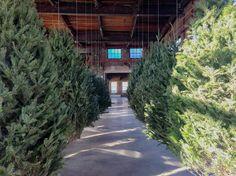 [ BIOS Monthly ] 廢棄聖誕樹製成的「漂浮森林」