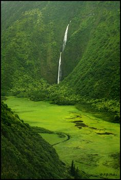 One of the most magical spots of ancient Hawaii is here in the Waimanu Valley.  You have to be in it to believe it.  Let bigislandreale.com show you how to put your toes into this beauty easily (and maybe even live nearby so you can see this alllll the time.)