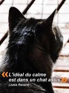 """"""" L'idéal du calme est dans un chat assis"""" Jules RENARD"""