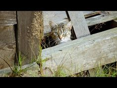 Help your community's outdoor cats weather the coldest months by providing them with food, water and shelter. Outside Cat House, Cats Outside, Feral Cat Shelter, Feral Cats, Cat Shelters, Heated Outdoor Cat House, Dog Obedience Classes, Cat Brain, Home