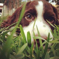 Dog's Strange Hobby May Be Most Boring Ever