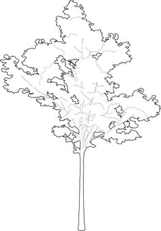 Drawing tips trees _ drawing tips for beginners, dr. Cultural Architecture, Romanesque Architecture, Education Architecture, Classic Architecture, Landscape Architecture, House Architecture, Architecture Diagrams, Architecture Portfolio, Architectural Trees