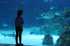 Our Educational Explorers visit DenBlaaPlanet Aquarium in Copenhagen - Life in our Van