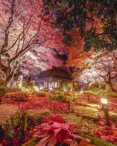 いいね!4,242件、コメント55件 ― h.manabeさん(@manabe470204)のInstagramアカウント: 「石の寺 教林坊 昨年最も綺麗な紅葉と思った場所です。紅葉の時期としては少し遅い時期でした。趣のある素敵なお寺です。それ程大きくも無いですのであまり大声は出さ無い様にお願いします。三脚は禁止です。…」