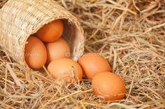 Ελληνικές Κότες: Πως διατηρoύσαν και αποθήκευαν τα αυγά εκτός ψυγείου τα παλιά χρόνια