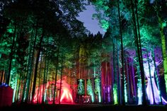 Electric Forest Festival!