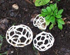 White cage fungus