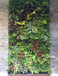 Landscape designer New York | plant wall design is a consulting company specialized in the design of vertical gardens, plant walls, living walls and green walls. - eng - Home
