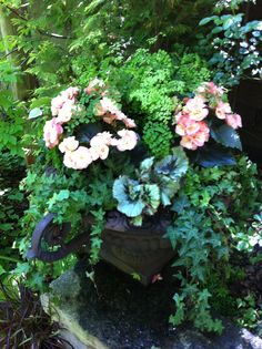 For a shady container garden: Mix Maidenhair ferns with Rieger begonias, Rex begonias and English ivy. #mygarden
