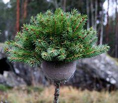 rautakaupoissa Christmas Wreaths, Xmas, Spruce Tree, Holidays And Events, Branches, Plants, Diy, Advent, Christmas