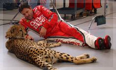 Ts foundation supporting tony s love for the animals cheetahs
